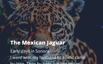 The Mexican Jaguar