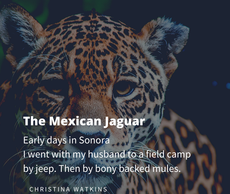 The Mexican Jaguar